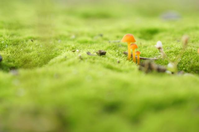 キノコの一種「冬虫夏草」の効果・効能や栄養素!